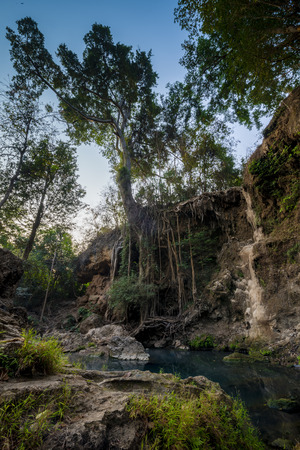 untouched: A tropical forest, jungle. Almost untouched nature Stock Photo