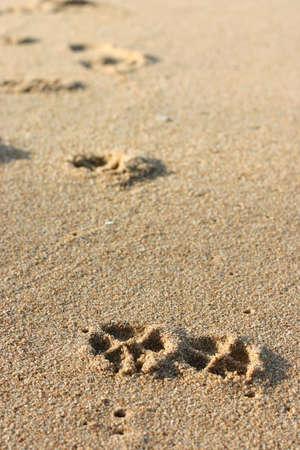 huellas de perro: Perro huellas sobre la arena  Foto de archivo