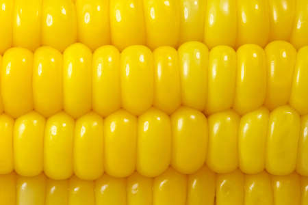 Sweet corn background Stock Photo - 7513299