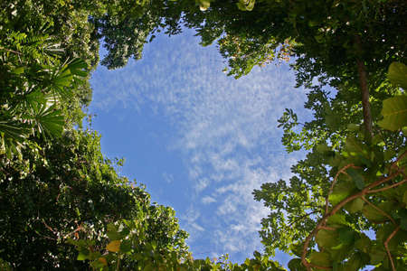 greenpeace: Heart-shaped Sky in a Tropical Forest