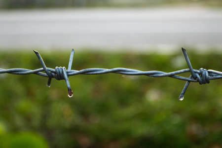 barbed wire Stock Photo - 7648114