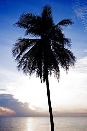 Palm tree silhouette Stock Photo - 7845985