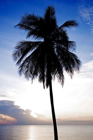Palm tree silhouette Stock Photo - 7845985