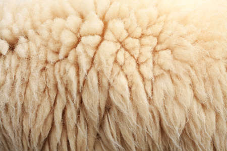 Sheepskin Background Stock Photo - 8253981