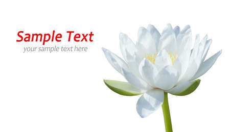White waterlily on white Stock Photo - 8451029