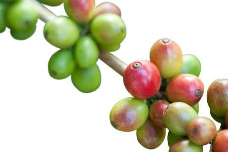 Coffee beans on white Stock Photo - 8451079