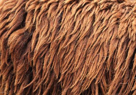 furry stuff: Brown Sheepskin Background