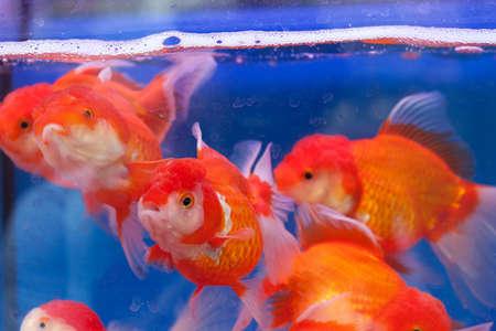 Fishtank with goldfish Stock Photo - 8564857