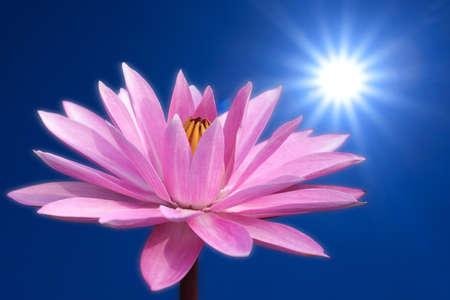Lotus on spring background photo
