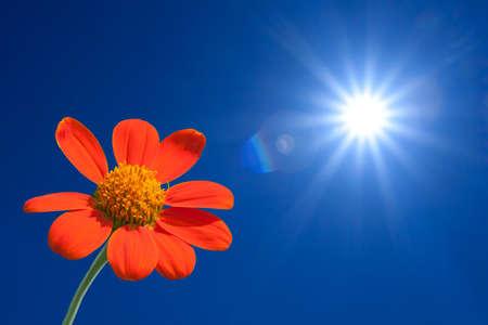 dia soleado: Girasol sobre fondo de primavera