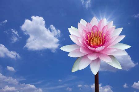 Lotus rouge sur fond de printemps Banque d'images - 9535821