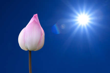The sun and pink lotus