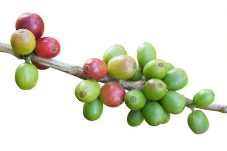 Grains de café isolés sur fond blanc Banque d'images - 9667876