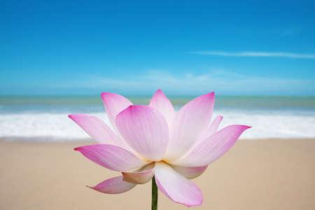 exotic flower: Lotus blossom on beach