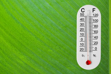 Thermometer on green leaf photo