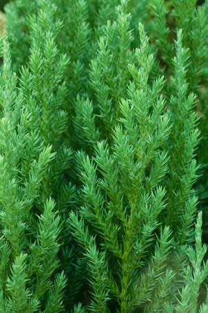 Closeup of green tree photo