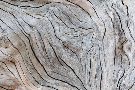 wood cut: Old wood texture