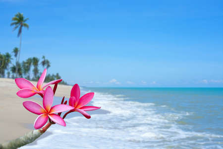 Plumeria flowers on the beach photo