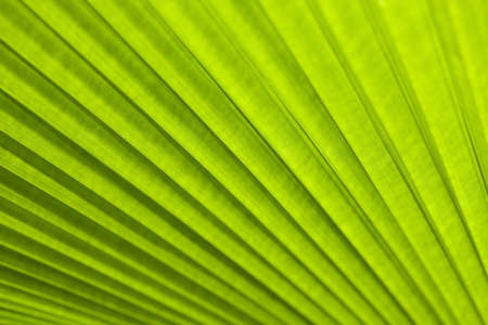 nice background: Texture of a green leaf as background Stock Photo
