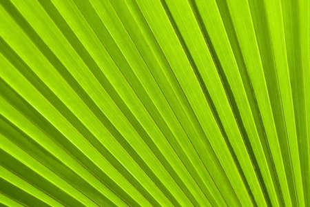 Texture d'une feuille verte comme arri?re-plan Banque d'images - 18845846
