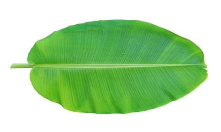 白い背景に分離されたバナナの葉 写真素材