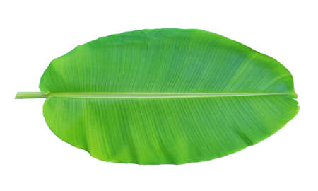 Banana leaf isolated on white background