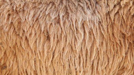 sheepskin: Marr�n de fondo de inclu�r  Foto de archivo