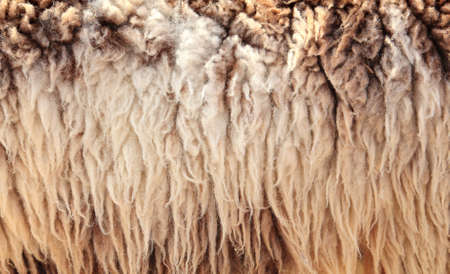 furry stuff: Sheepskin Background