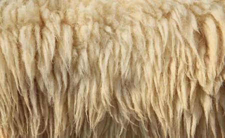 sheepskin: Antecedentes de piel de oveja Foto de archivo