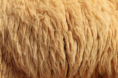 warm things: Sheepskin Background