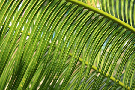 ferns: Background of tropical ferns Stock Photo