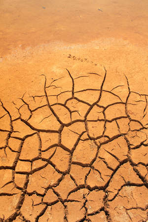 barrenness: Dry cracked earth texture