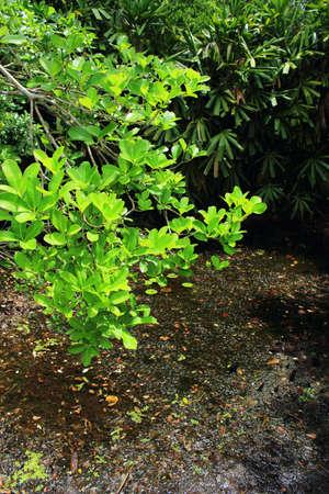 turba: Bosques pantanosos de turba Foto de archivo