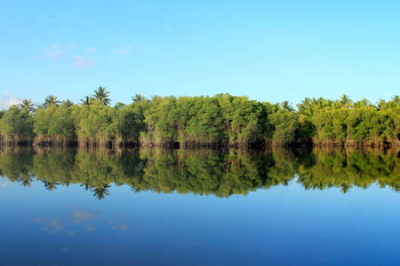 actueel: Mangrove forest topical rainforest