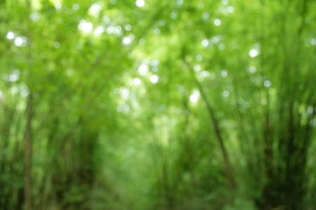nature abstraite: Abstract nature background