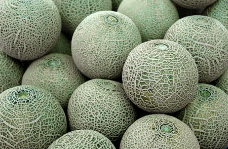 cantaloupe: Closeup of cantaloupe melon Stock Photo