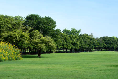 Park with Green Grass and Trees Stock Photo