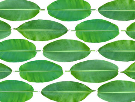 Fresh whole banana leaf background