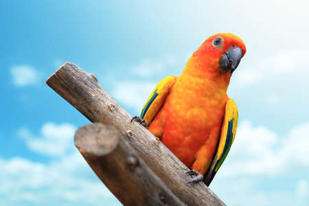 Macaw Parrot with blue sky