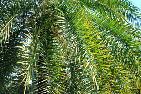 Green palm leaves background Stock Photo