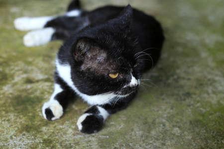 Hardened homeless black cat in Thailand Stock Photo