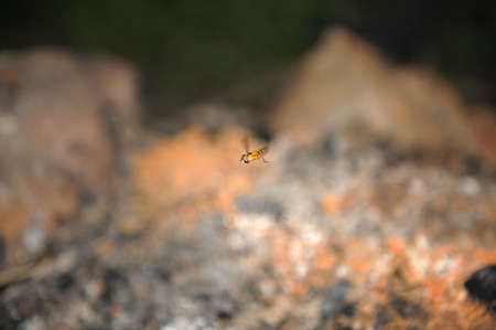 hover: hover fly