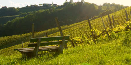 bench at a vineyard on romantic affection photo