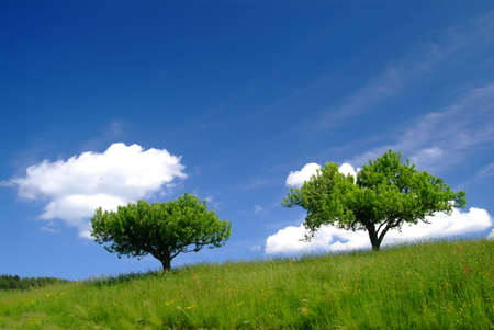 trees with clouds and blue sky photo