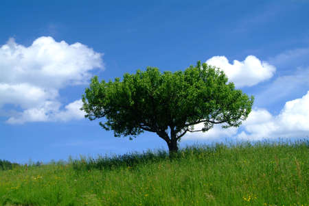 rooted: tree and sky
