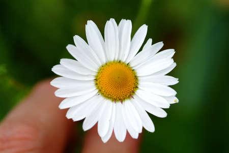 white blossom photo