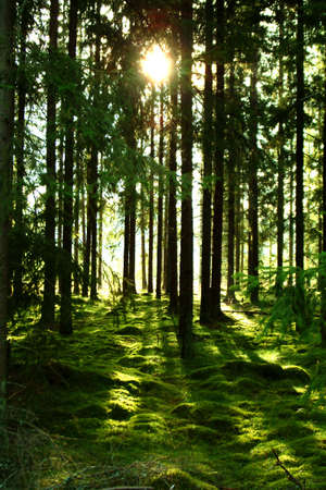 green wood by sunlight Stock Photo