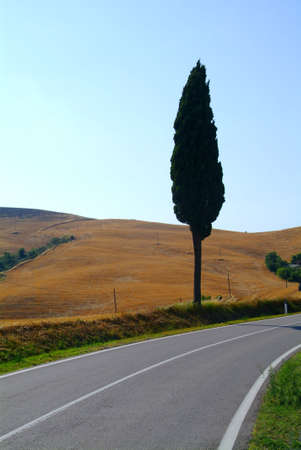 tree in curve photo