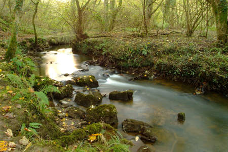 an idyllic course of a stream in the autumn photo