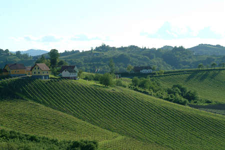a panorama of a green vineyard idyll in the south of styria